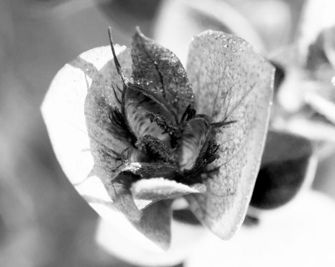 Black-and-white-flycatcher
