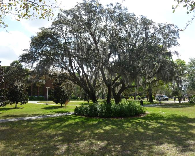 oaktrees