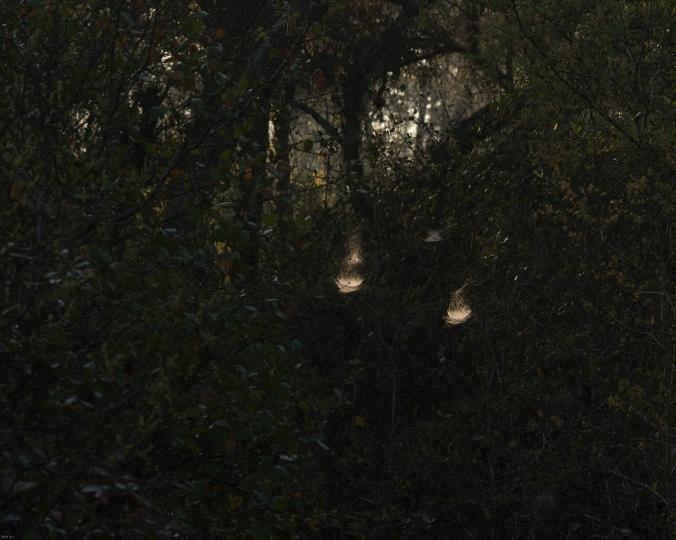 weblights