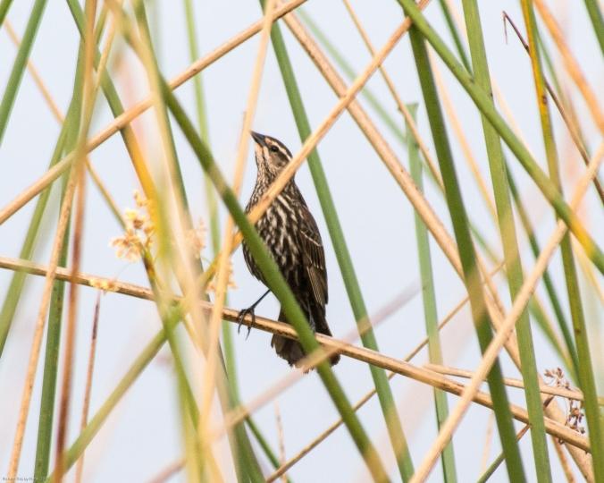 Orlando-Wetlands-Park