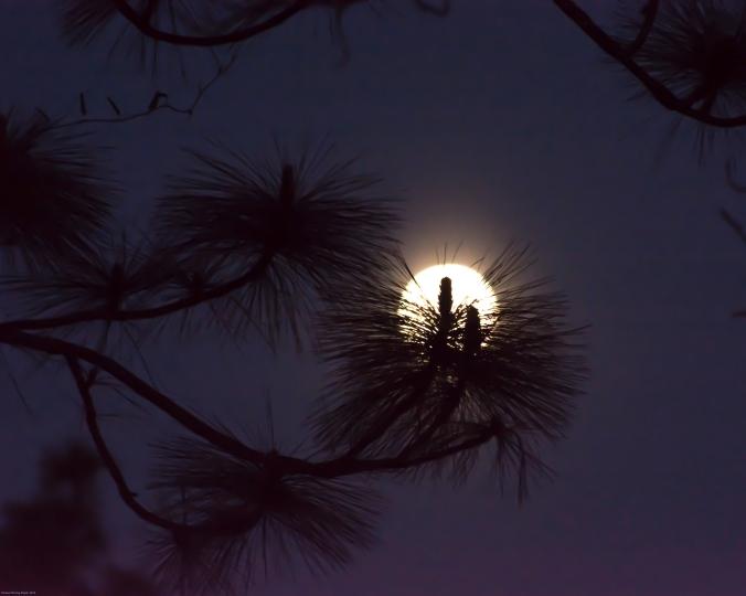 moonpine2