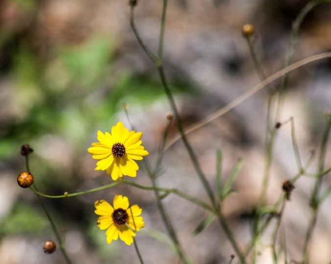 tick-seed