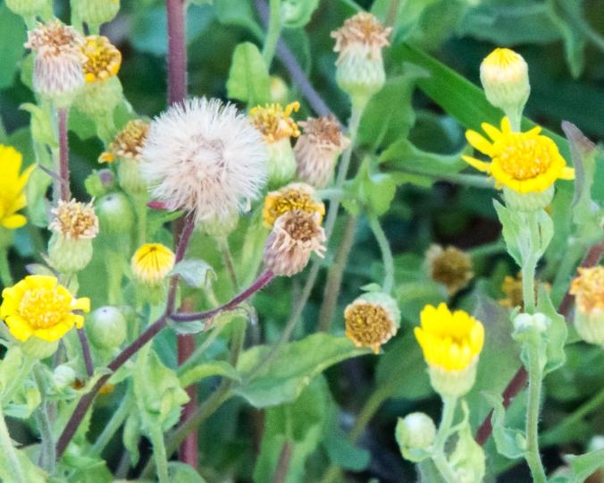 moreflower