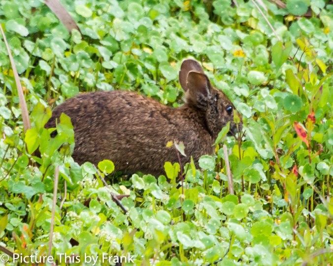 marshrabbit (1 of 1)