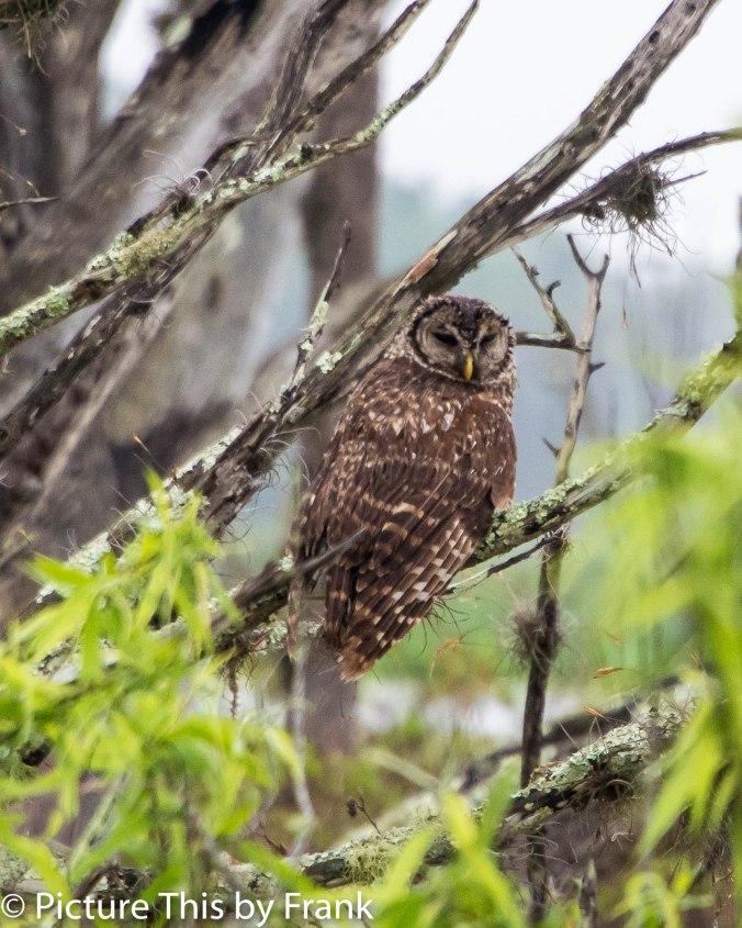 owlmail2 (1 of 1)