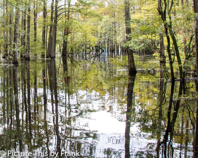 swamp (1 of 1)