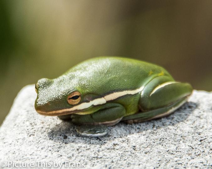 tfrog (1 of 1)